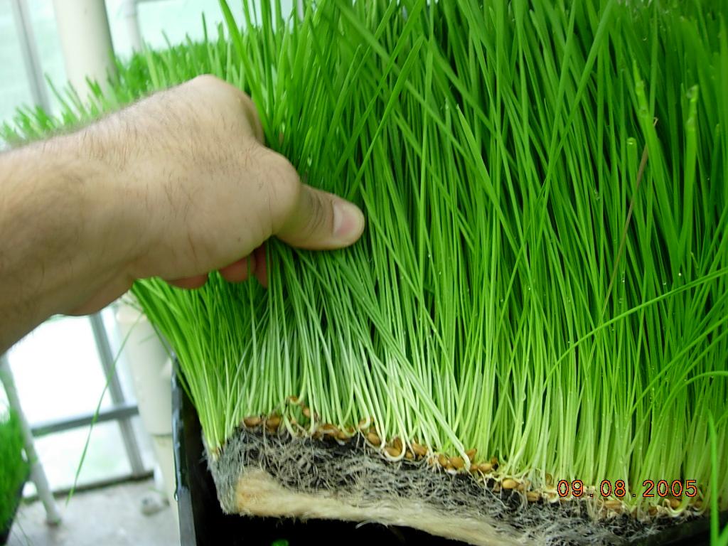 Selecci n de pasto en poca de lluvias radiom s for Como cuidar el pasto