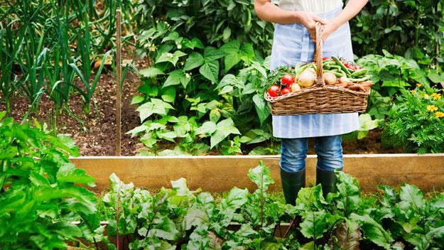 Cultivo de hortalizas radiom s Cultivar vegetales en casa