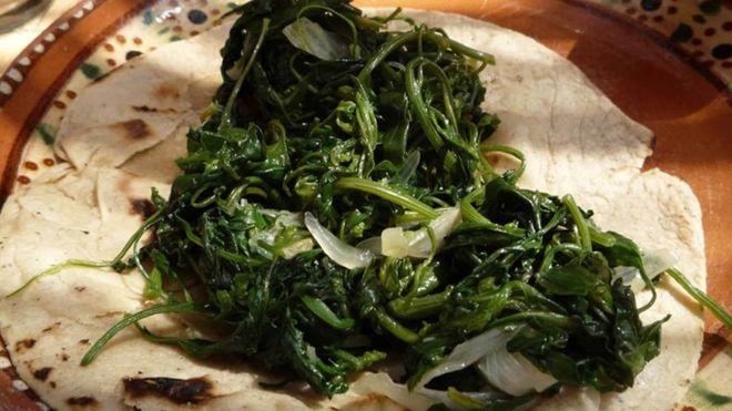Quelites: más que una hierba comestible, un tesoro nacional