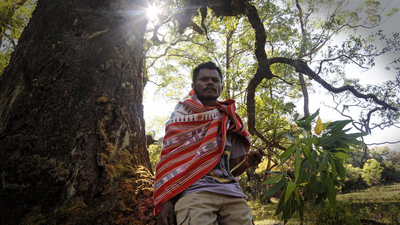 México sexto lugar más peligroso para los ambientalistas | la mayoría son indígenas