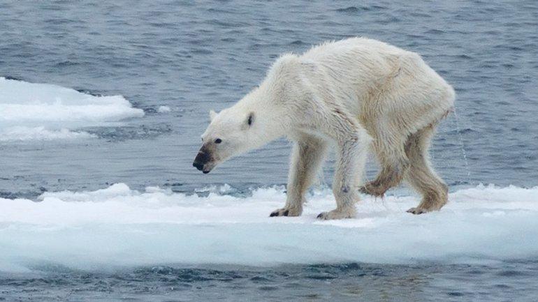 Nuestro planeta está muy dañado. Estas acciones cotidianas, pueden hacer el cambio.