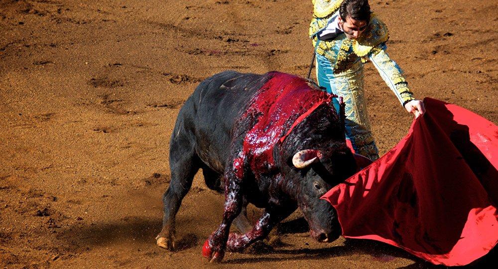 Corridas de toros y peleas de gallos. De la tradición a la reflexión.