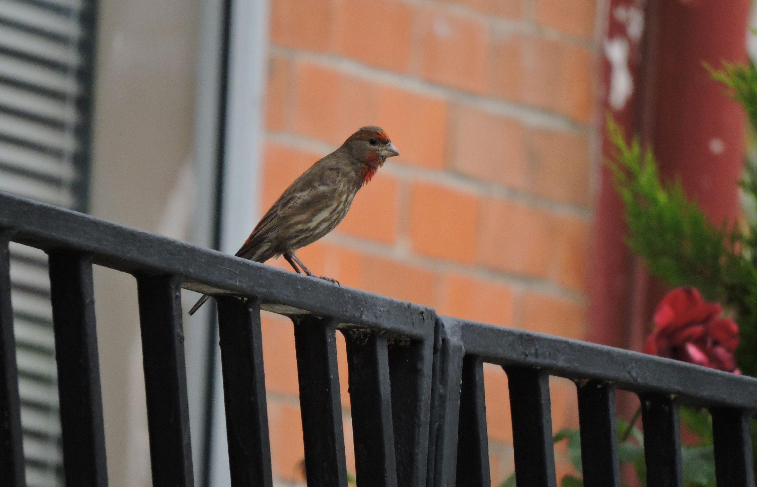 ¿Ya escuchaste el canto de las aves en estos días de confinamiento?