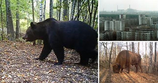 Chernobyl y el coronavirus, ejemplos de cómo el planeta puede recuperarse sin humanos