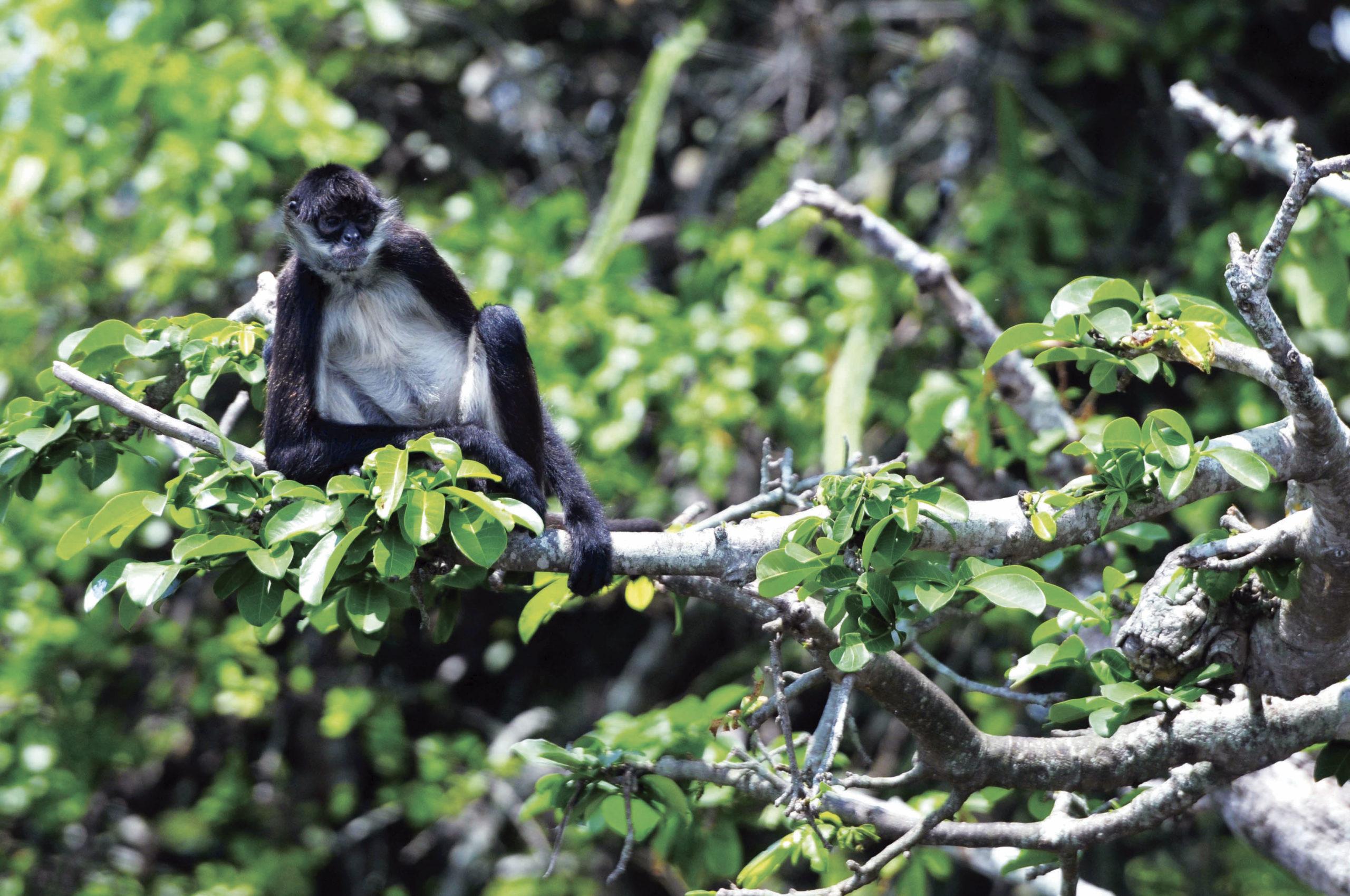 La selva de Los Tuxtlas sólo conserva el 10% de su  territorio original