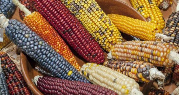 Privatización de semillas ¿Cómo afectaría a los pequeños agricultores?