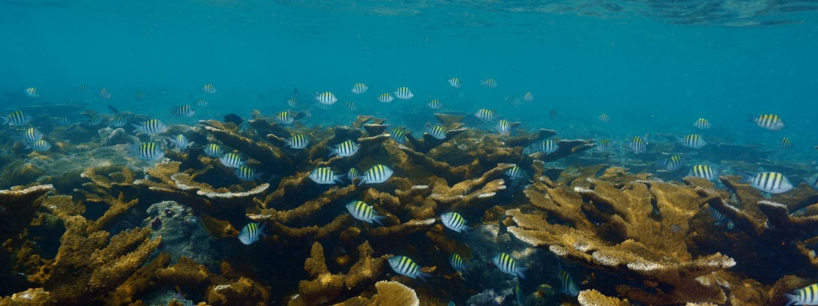 En Veracruz se encuentra el conjunto de arrecifes más grande del golfo de México.