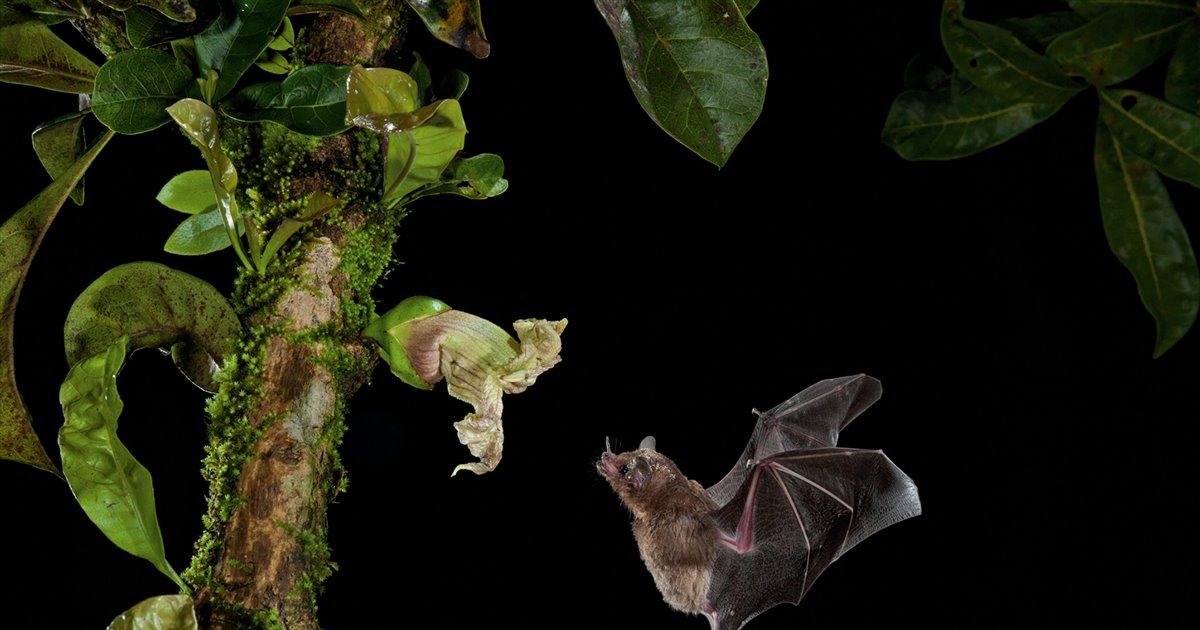 Los murciélagos: pieza clave para el ecosistema.
