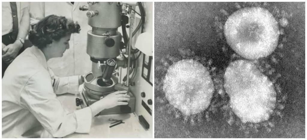 June Almeida, la viróloga que retrató al coronavirus, el VIH y la rubéola