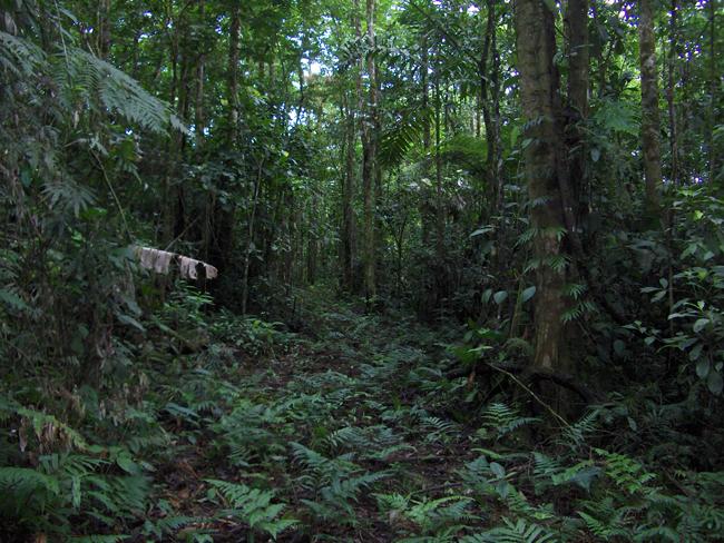En el Mes del Árbol, difunden beneficios que brindan sistemas naturales de bosques y selvas