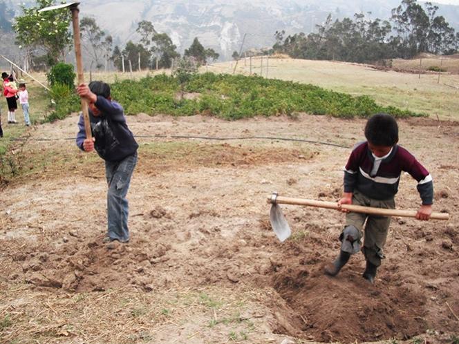 Menores que quieran trabajar deberán tener al menos 15 años