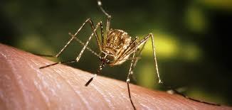 Por lluvias intensifican acciones contra el dengue, zika y chikungunya