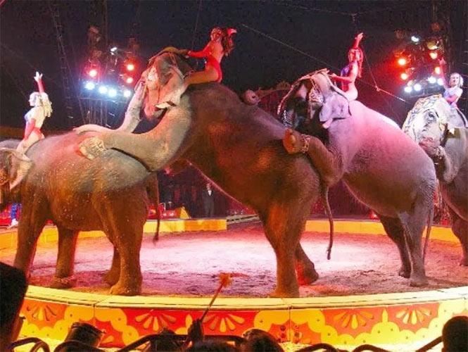 Semarnat debe informar destino de animales retirados de circos, por mandato de ley: INAI
