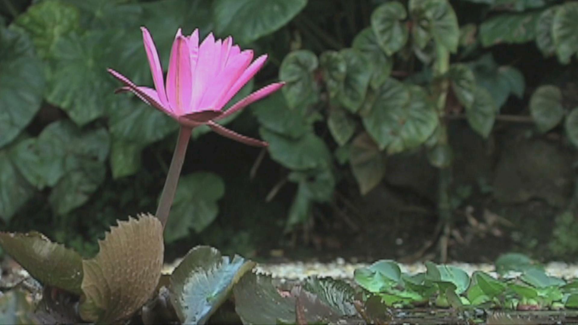 Para resolver problemas ambientales, la Conabio lleva a cabo la semana de la diversidad biológica