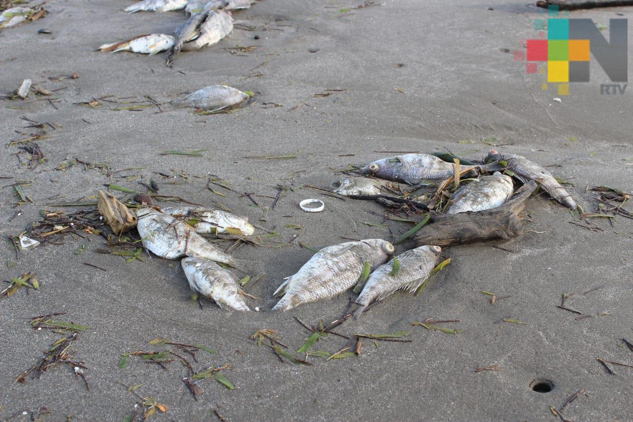 Calentamiento global convierte al mar en un caldo de muerte: Científica