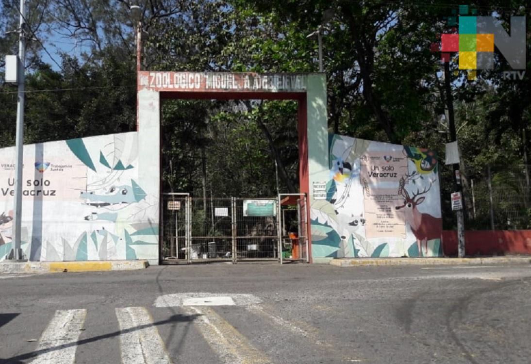 Zoológico de Veracruz seguirá cerrado hasta estar en semáforo epidemiológico verde