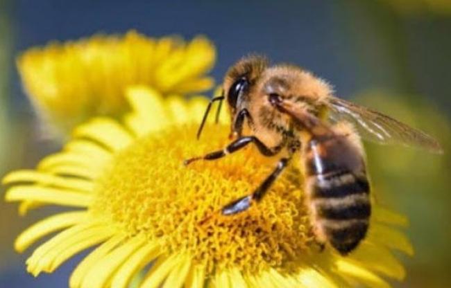 En simposium abordaron la importancia de las abejas como polinizadoras