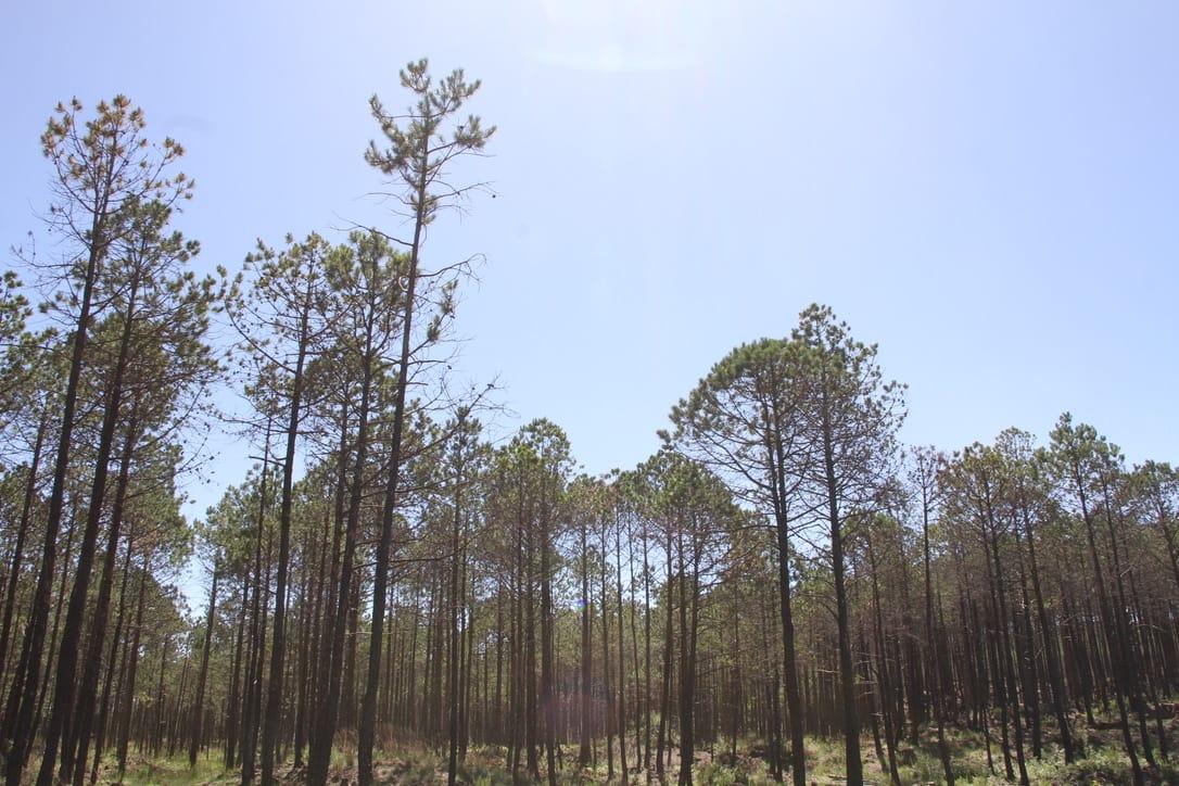 Los tres niveles de gobierno deben trabajar para revertir daños en los bosques de niebla