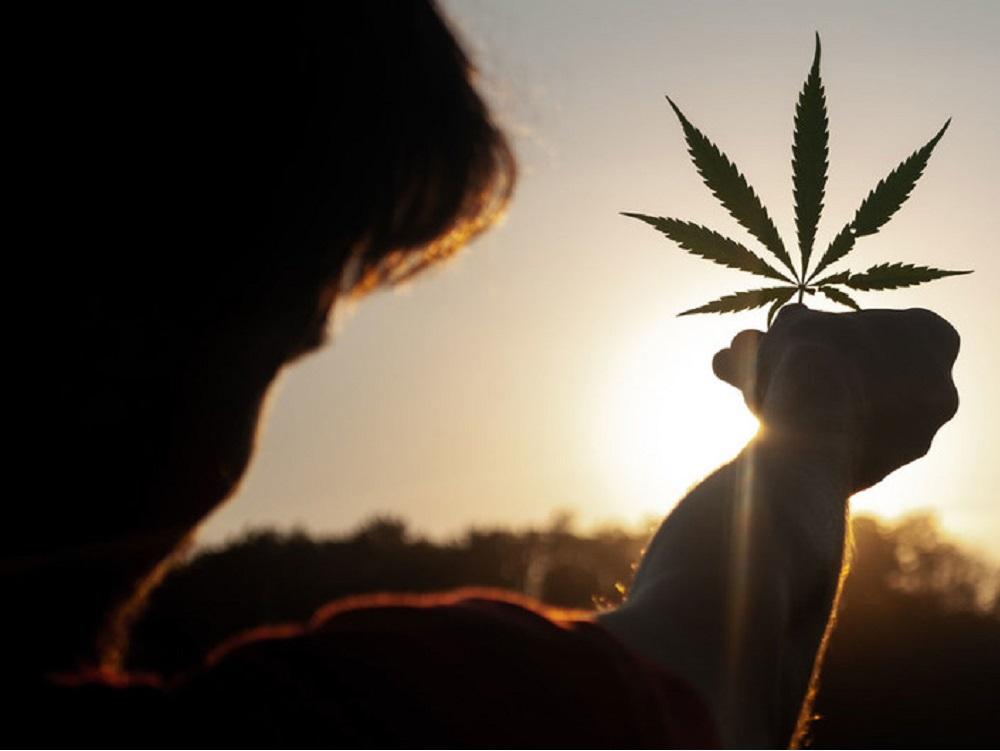 Cannabis ya no figura en las listas de estupefacientes como una droga peligrosa