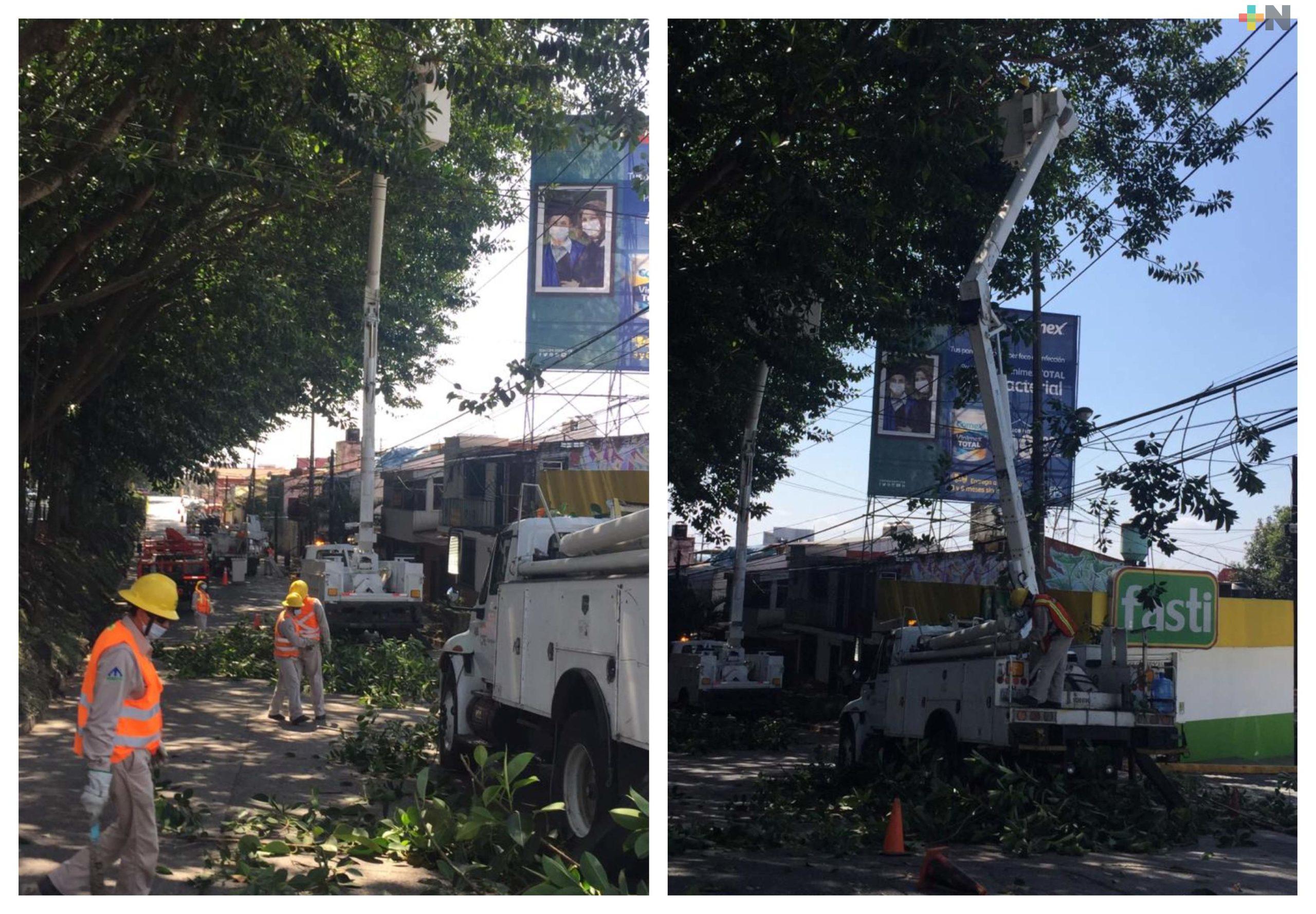 Inician trabajos de poda de árboles de la avenida Maestros Veracruzanos