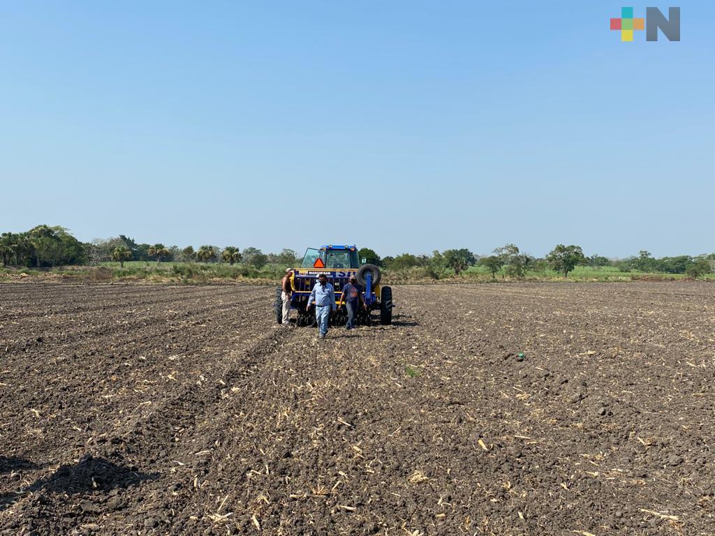Productores de arroz reiniciarán sus cultivos, reciben pago del Seguro Catastrófico