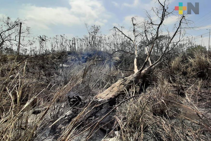 Incendio de pastizal en carretera Veracruz-Medellín pudo haber sido provocado: PC Boca del Río
