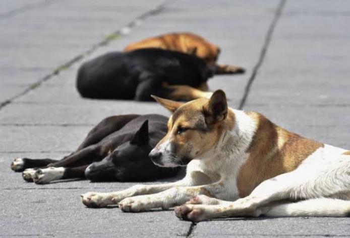 Agresor de perrito en Xico fue detenido y está en penal de Pacho Viejo