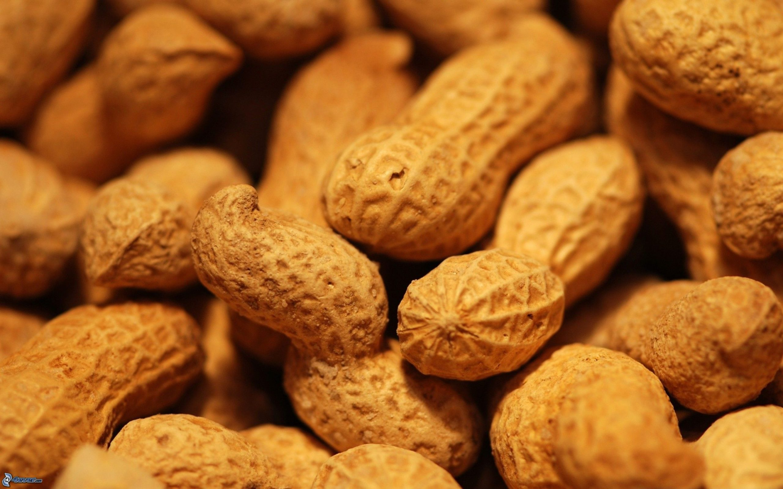 Secretaría de Agricultura federal homenajea al cacahuate