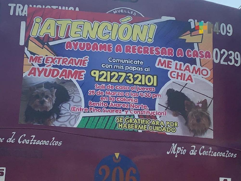 Con lonas en camiones, buscan a perrita extraviada en Coatzacoalcos
