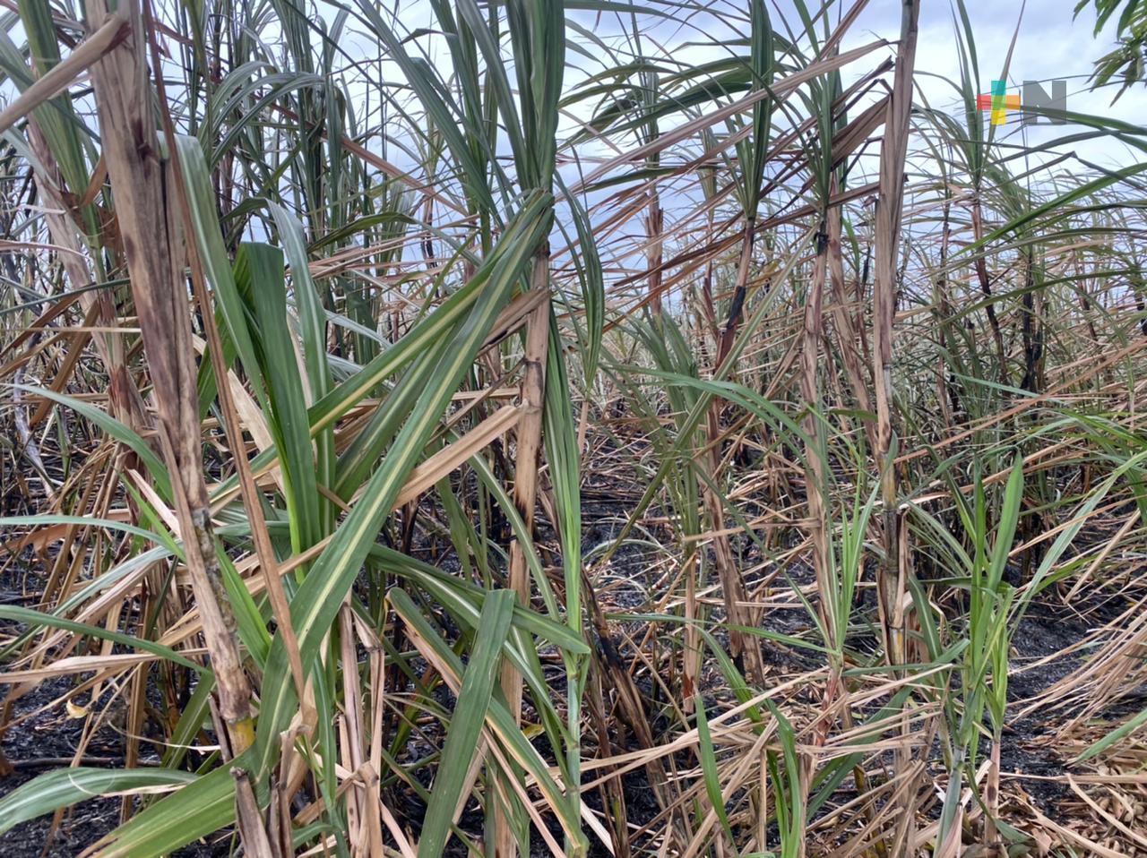 Urge infraestructura de riego cañero para la Cuenca del Papaloapan