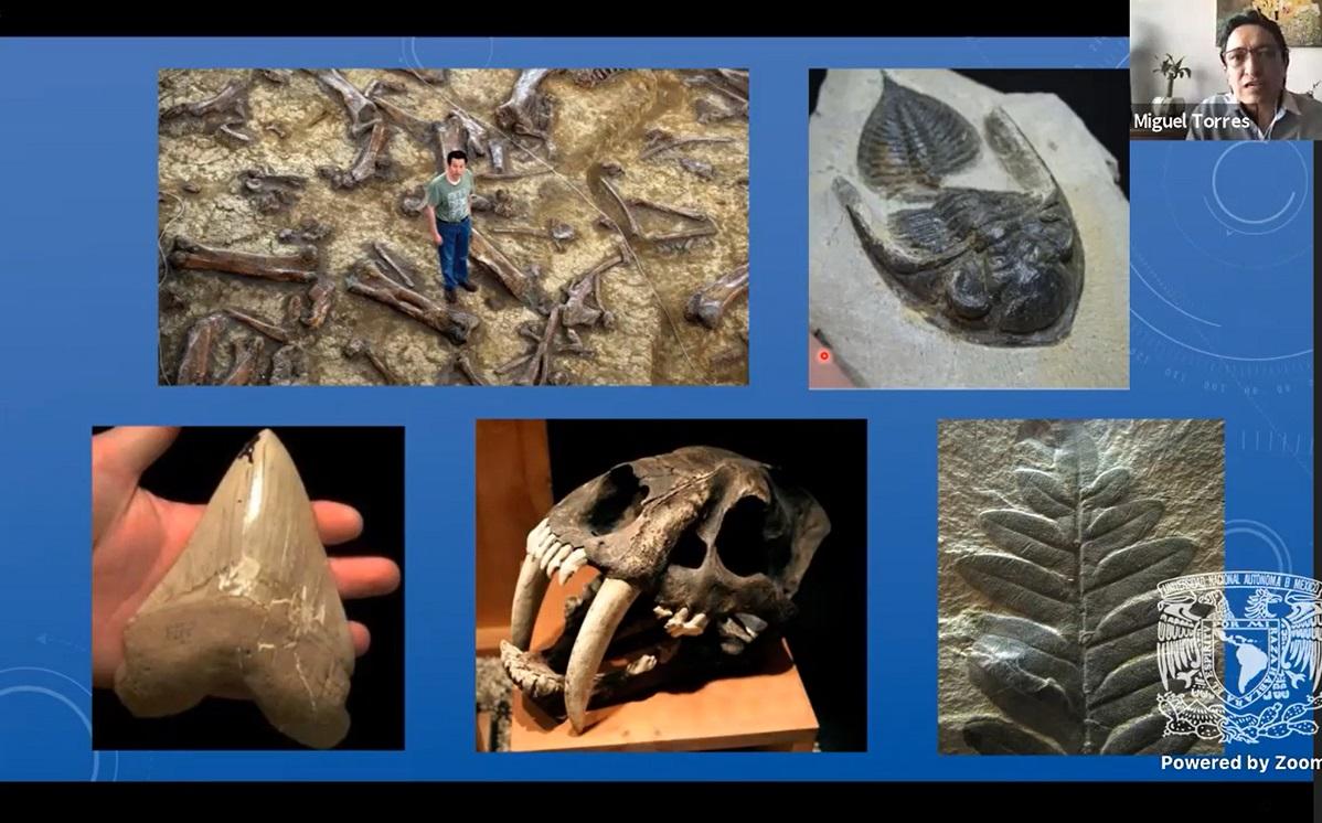 Repetimos condiciones similares a las que ocasionaron extinciones masivas