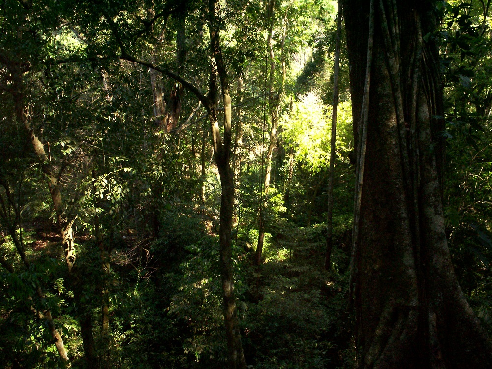 Justicia llegará a la comunidad de la Selva Lacandona