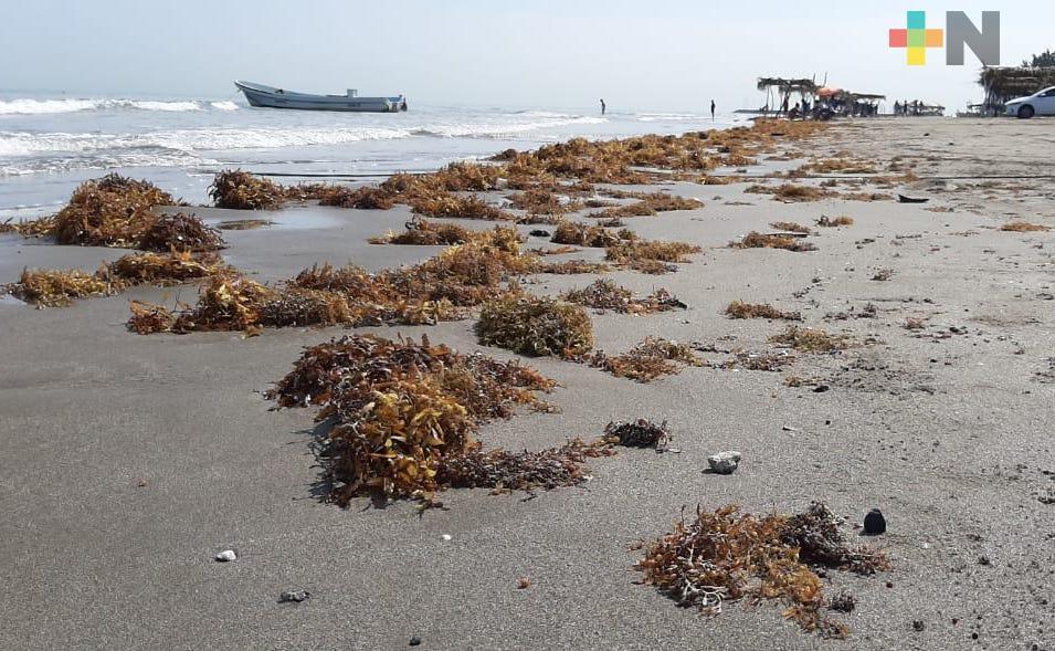 Mal tiempo y sargazo afectaron a prestadores de servicios turísticos en Antón Lizardo