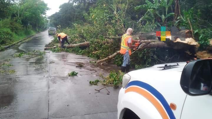 Árboles caídos e inundaciones por lluvia en Coatepec