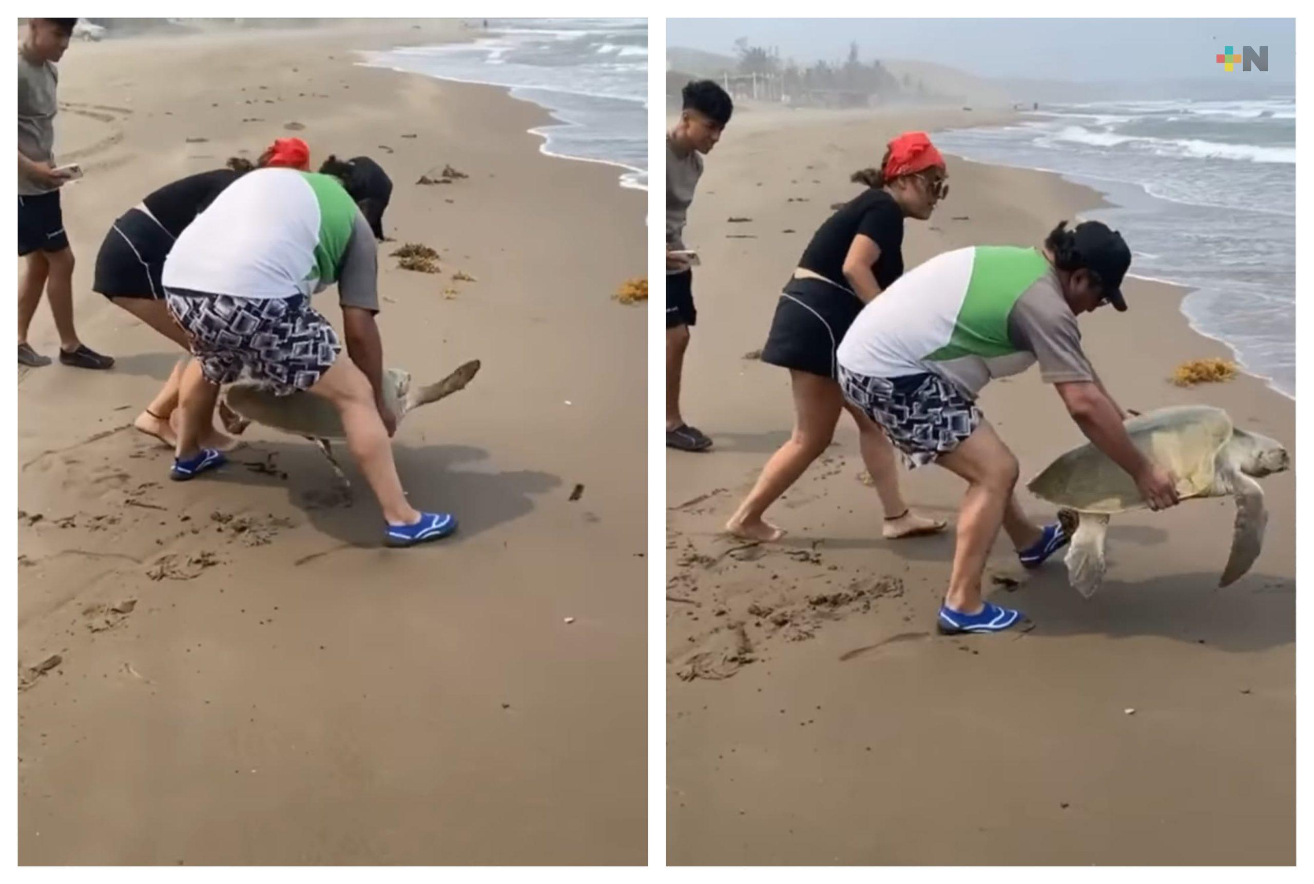 No molestar a las tortugas marinas cuando desoven, piden autoridades