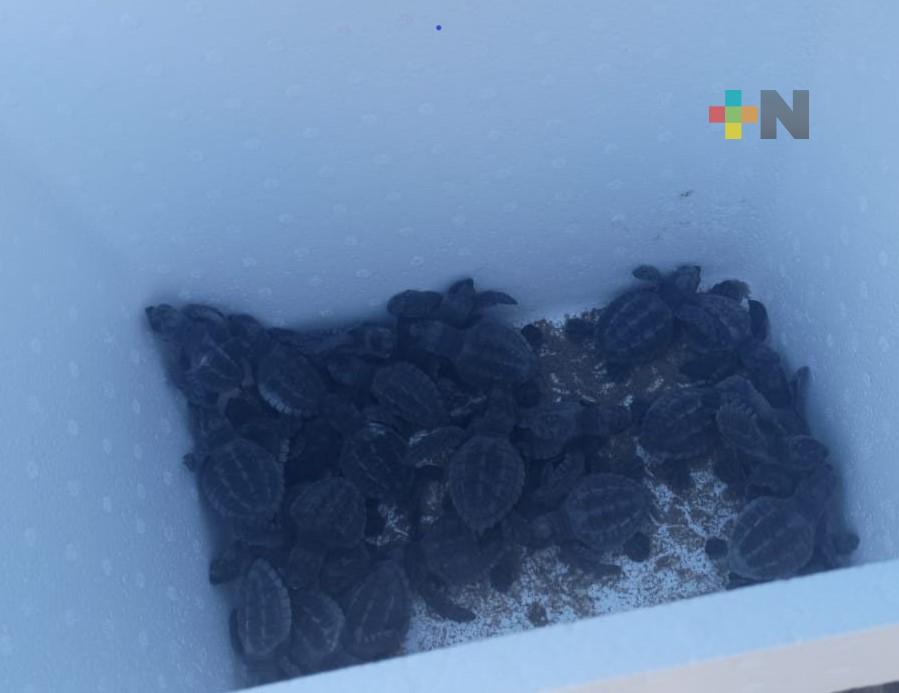 Liberaron 29 crías de tortuga en playas de Coatzacoalcos