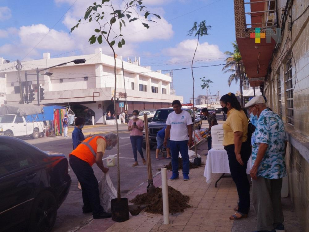 En municipio de Veracruz,  inició siembra de árboles en la zona cercana del malecón