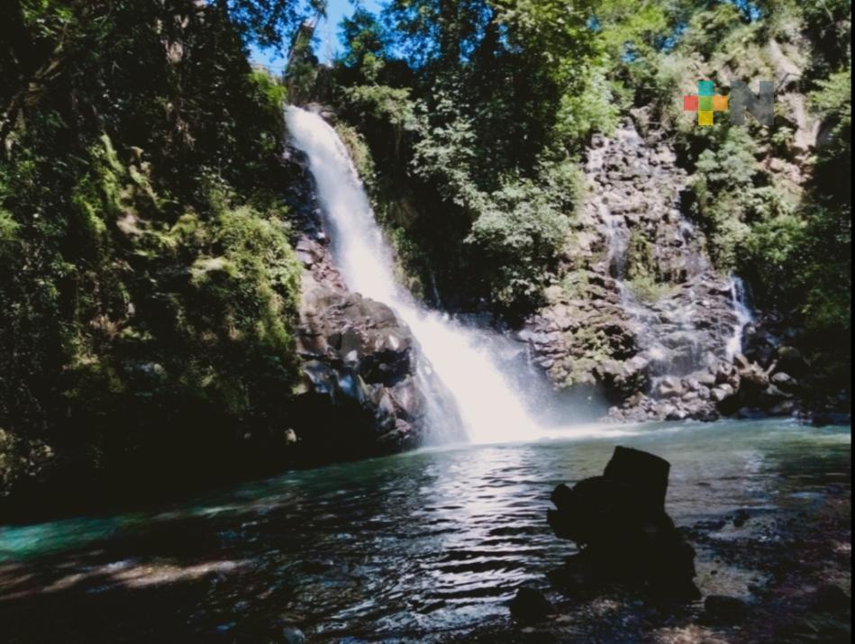 Limpieza y reforestación en márgenes del Río Sedeño, tarea que mantienen vecinos de la zona
