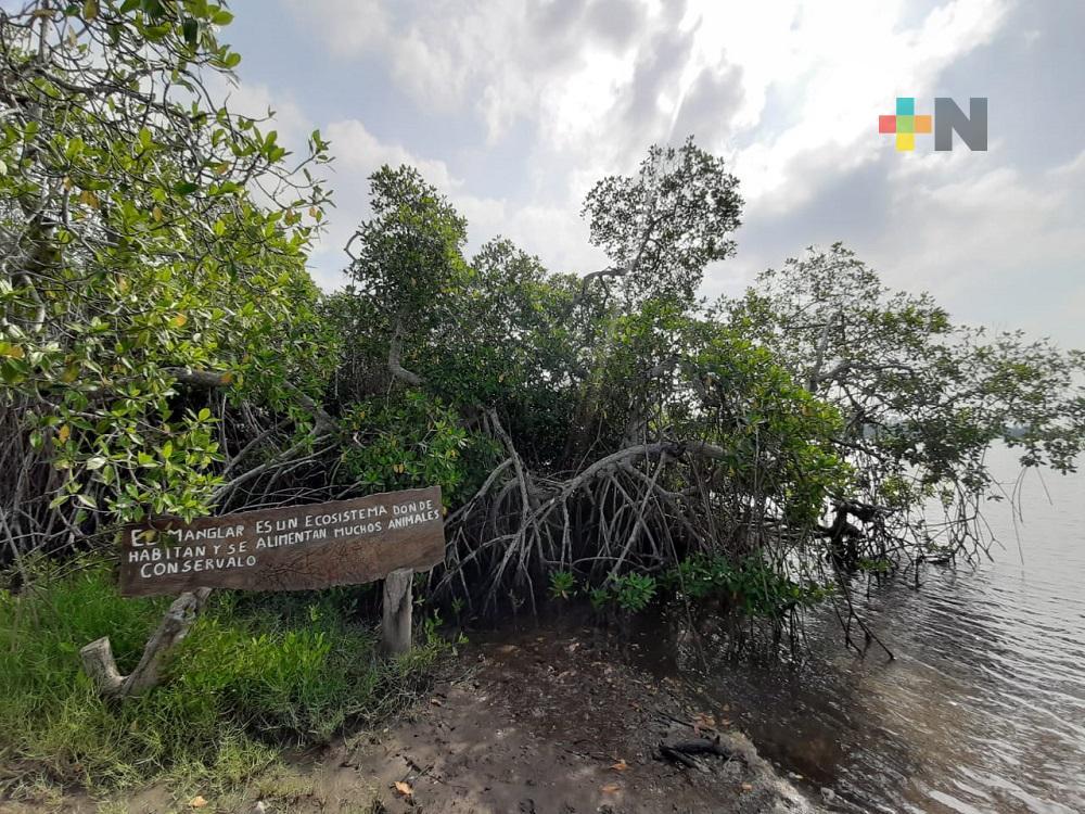 Sociedad y gobierno, deben unir esfuerzos para el rescate del manglar: biólogo