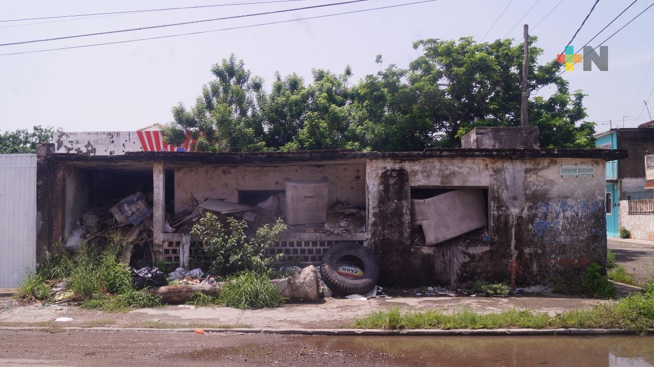 Piden atender problemas de basura e inundación de calles de colonia Miguel Ángel de Quevedo, en Veracruz