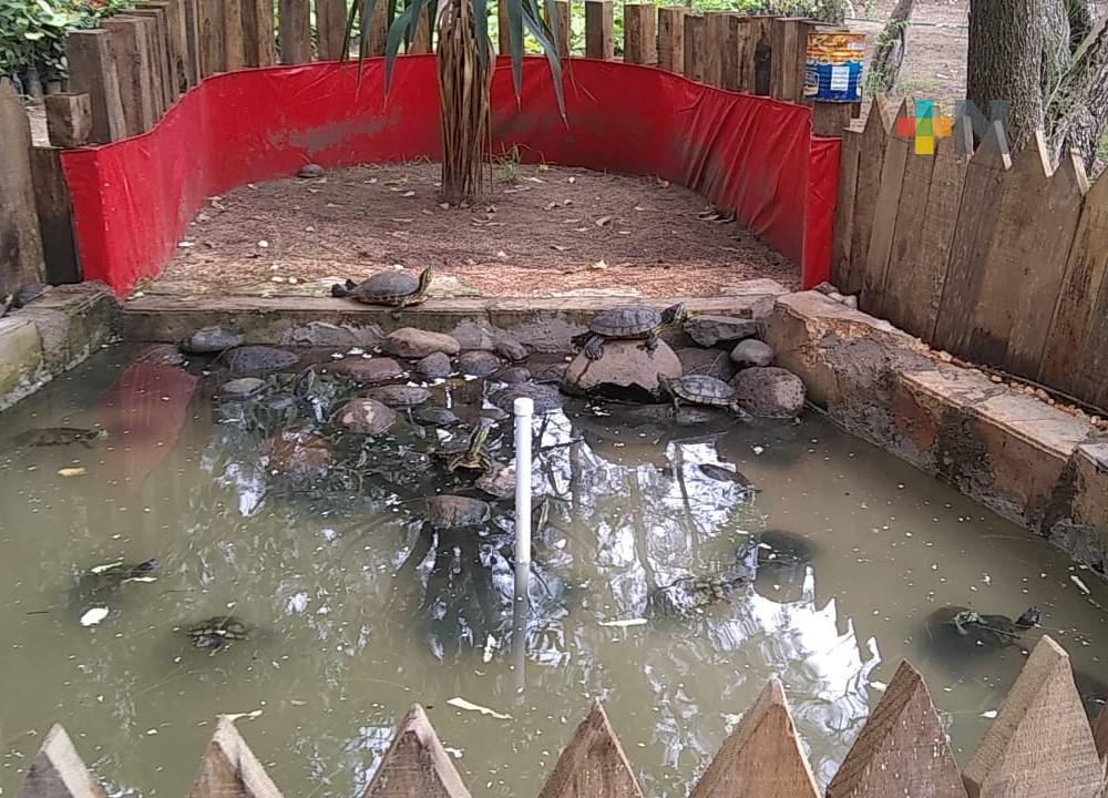 Tras rescate de 26 tortugas, crean tortuguero municipal en Coatzacoalcos