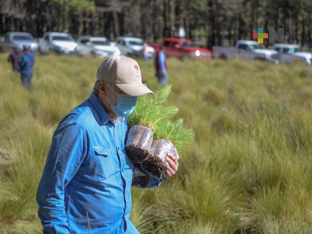 Con siembra de árboles en reserva, se beneficiará Xalapa: alcalde Hipólito Rodríguez