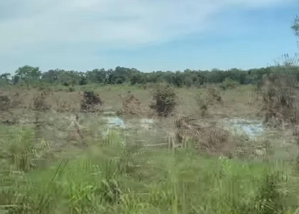 En Álamo, Sedarpa inició recuento de daños en cultivos afectados por huracán Grace