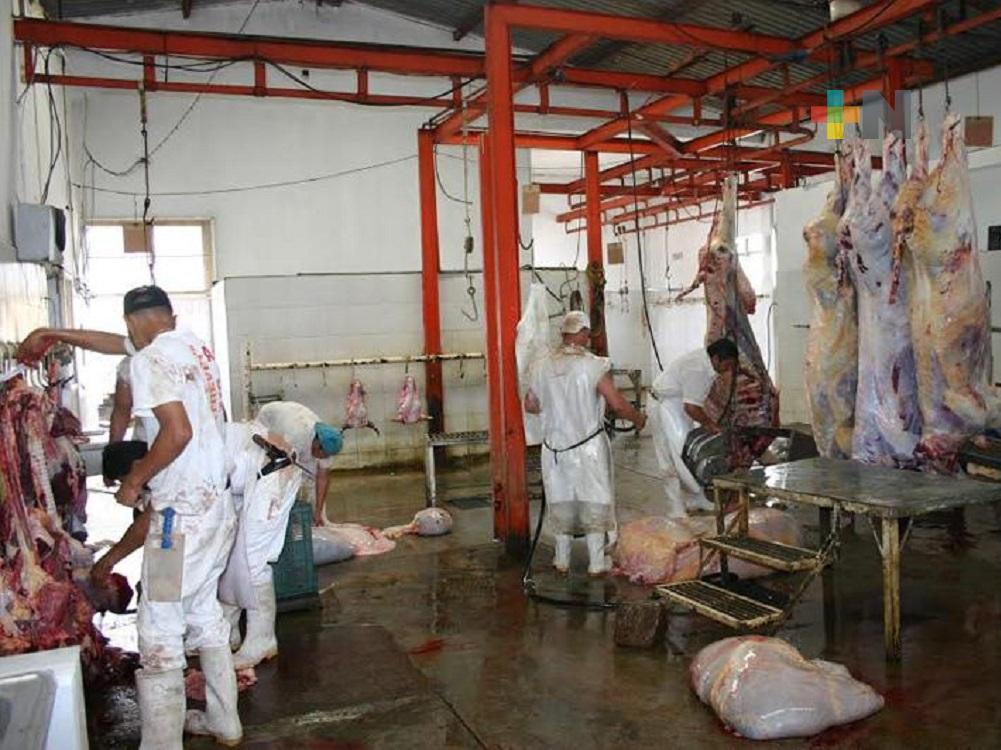 Disminuye sacrificio de bovinos en rastro municipal de Tuxpan