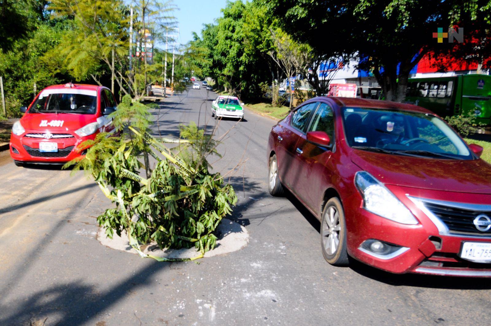 Colocan ramas para hacer visible una alcantarilla sin tapa en avenida Arco Sur
