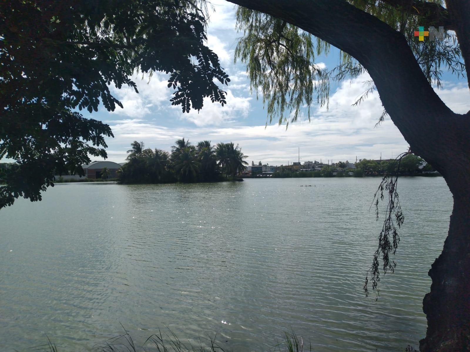 Respetar a cocodrilo de laguna de Malibrán, piden ambientalistas