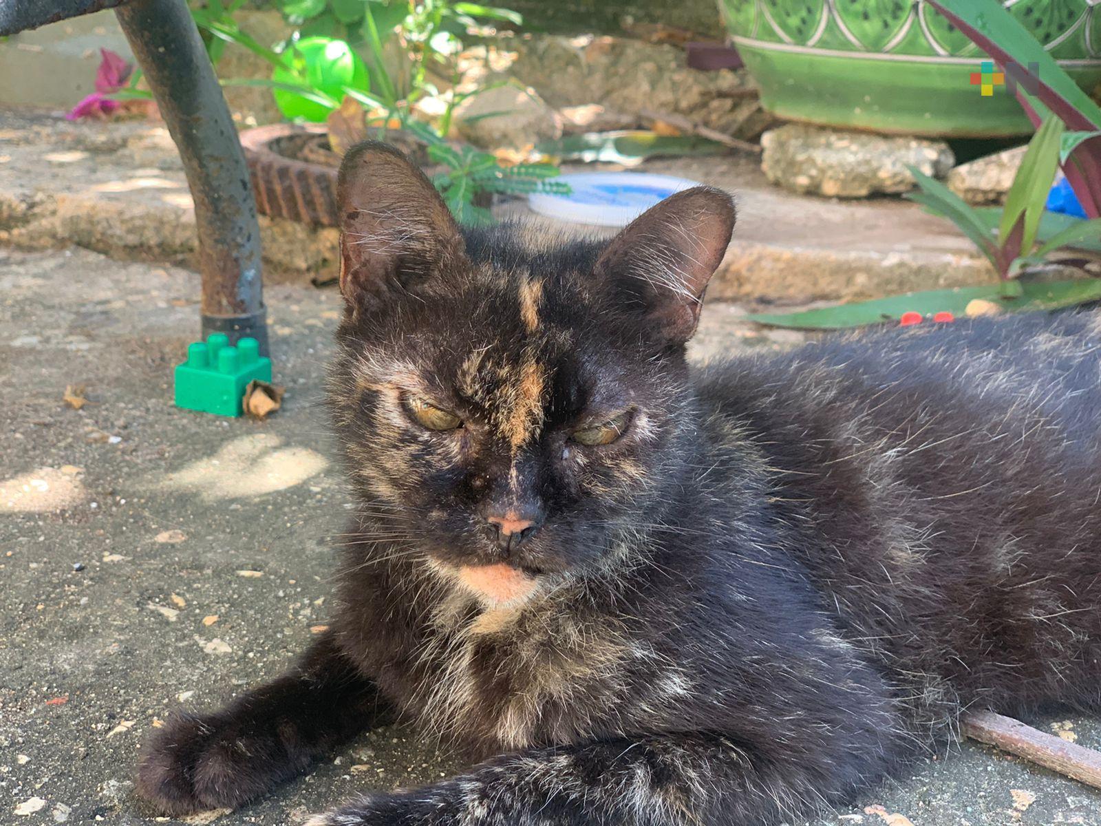 Inicia temporada de no dar gatos en adopción; son ocupados en rituales: Isis Guillén