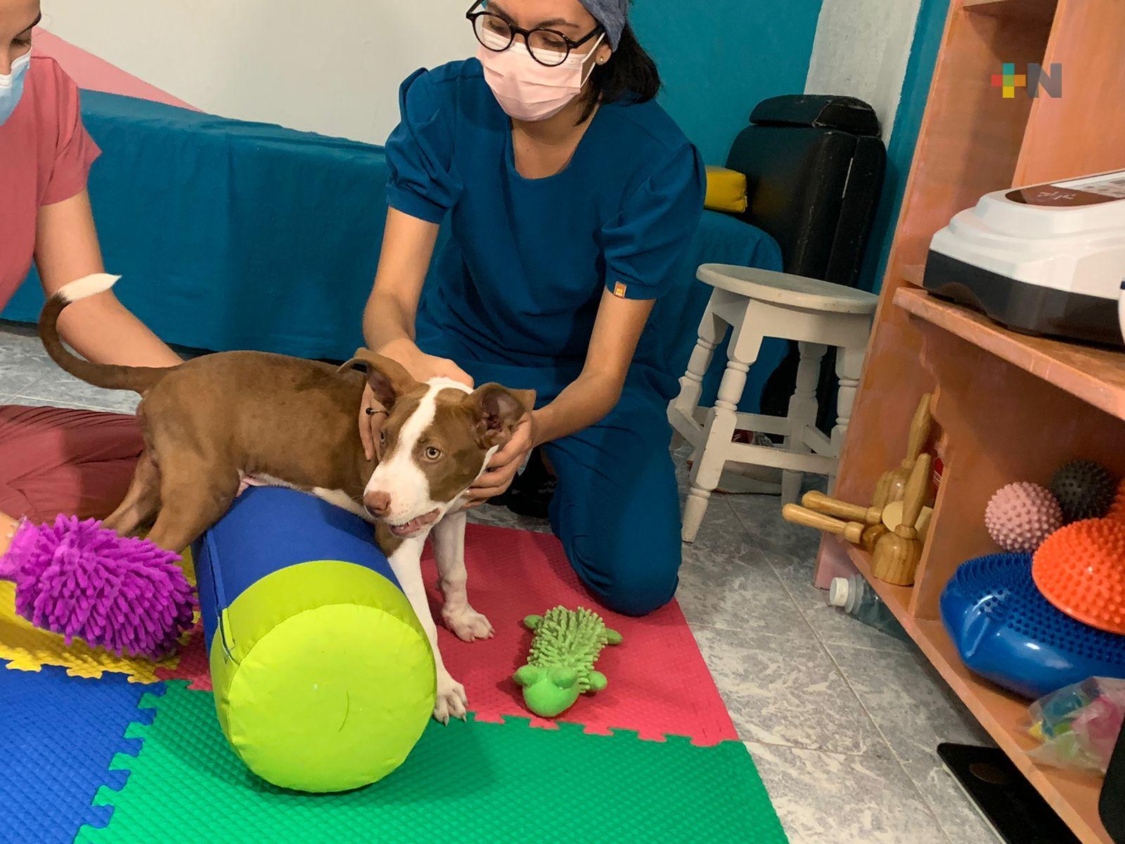Chester, primer perro en Coatzacoalcos en recibir fisioterapia