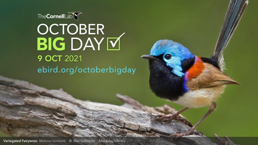 Este sábado, el October Big Day