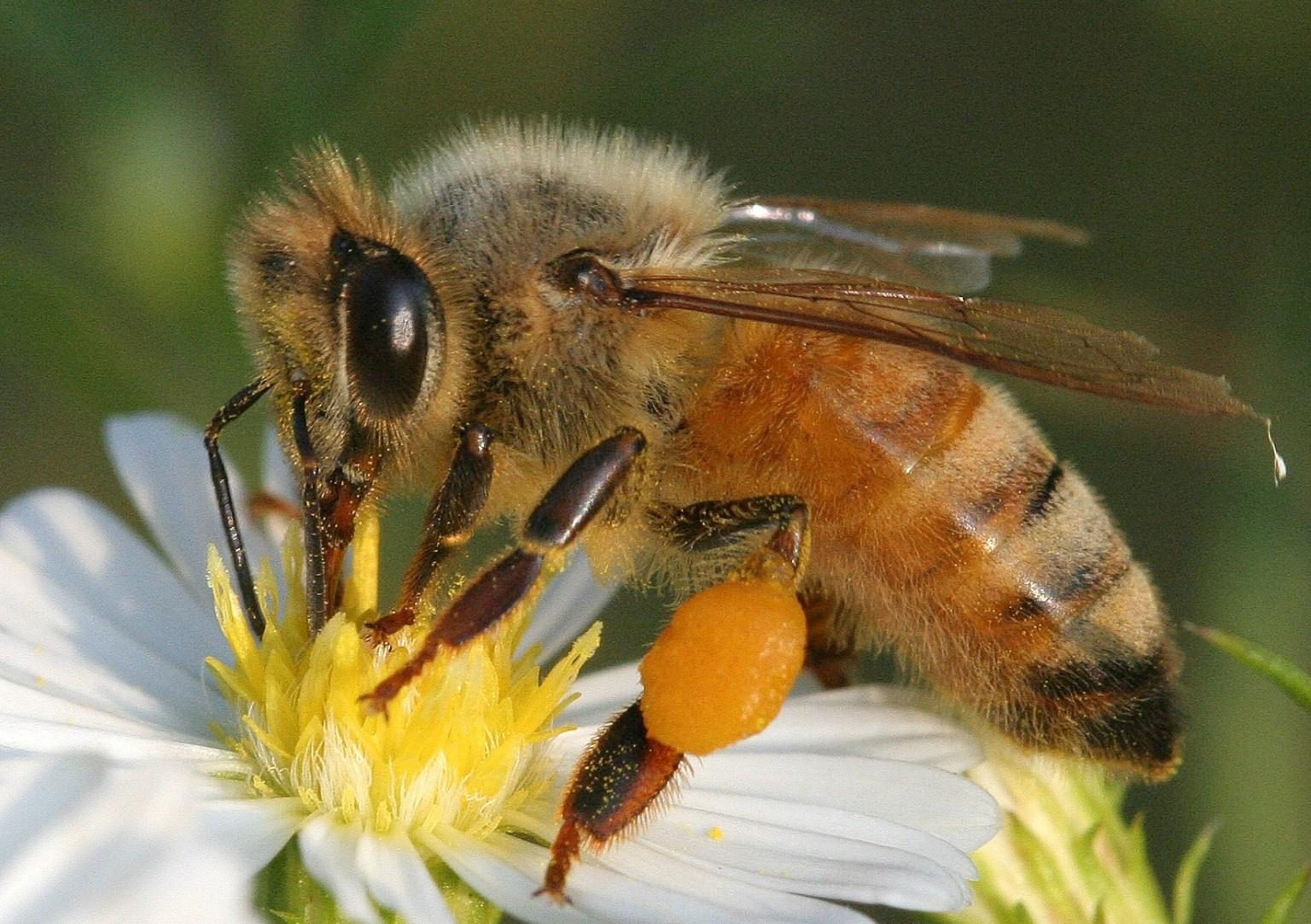 Manejo y características de las abejas meliponas | RADIOMÁS